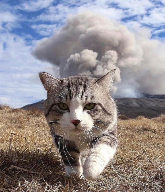 Avoiding Mount Aso by @noraneko_nyankichi